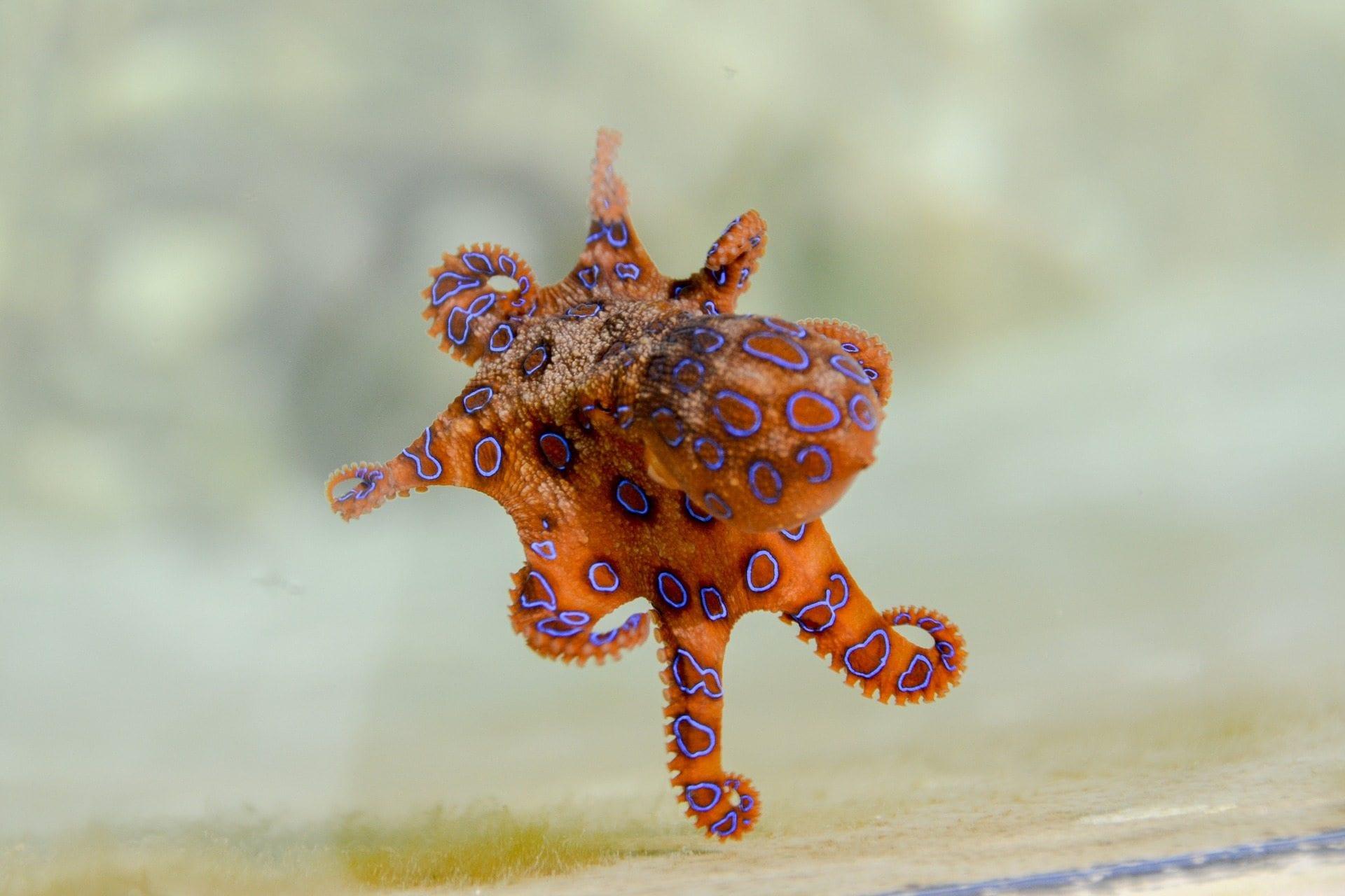 octopus-image-blog